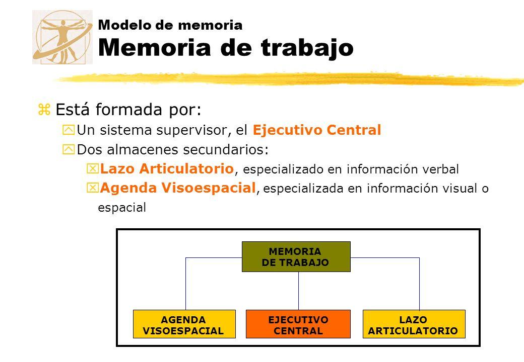 Modelo de memoria Memoria de trabajo zEstá formada por: yUn sistema supervisor, el Ejecutivo Central yDos almacenes secundarios: xLazo Articulatorio,