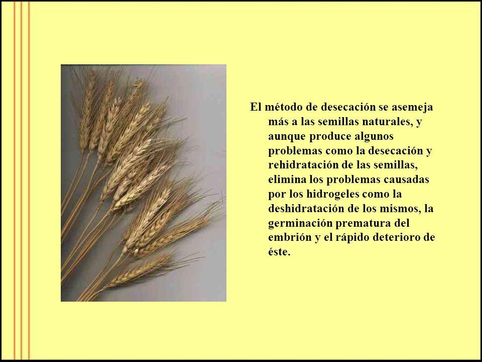 El método de desecación se asemeja más a las semillas naturales, y aunque produce algunos problemas como la desecación y rehidratación de las semillas