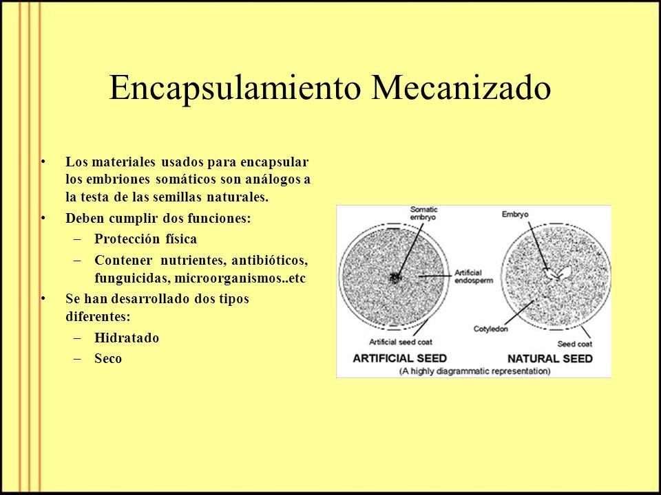 Encapsulamiento Mecanizado Los materiales usados para encapsular los embriones somáticos son análogos a la testa de las semillas naturales. Deben cump