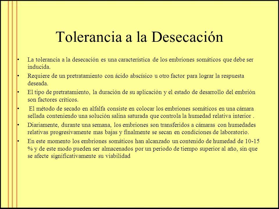 Tolerancia a la Desecación La tolerancia a la desecación es una característica de los embriones somáticos que debe ser inducida. Requiere de un pretra