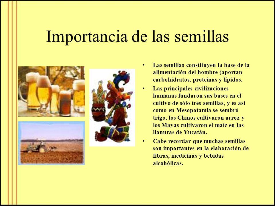 Importancia de las semillas Las semillas constituyen la base de la alimentación del hombre (aportan carbohidratos, proteínas y lípidos. Las principale