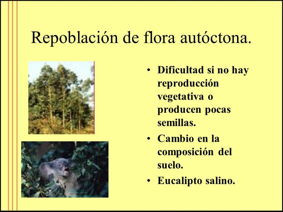 Repoblación de flora autóctona. Dificultad si no hay reproducción vegetativa o producen pocas semillas. Cambio en la composición del suelo. Eucalipto