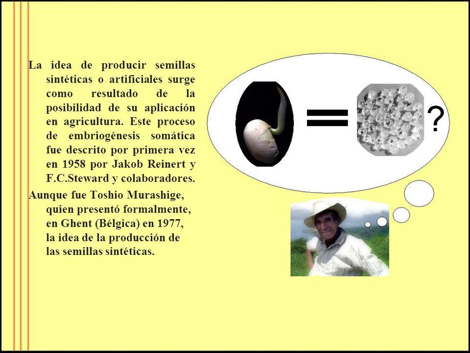 La idea de producir semillas sintéticas o artificiales surge como resultado de la posibilidad de su aplicación en agricultura. Este proceso de embriog