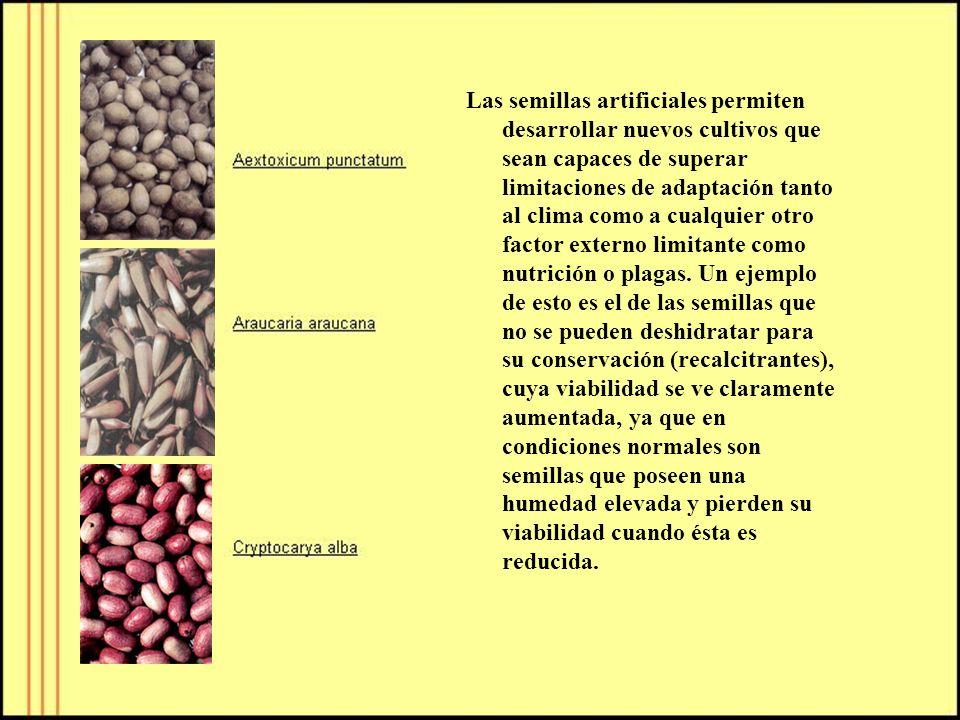 Las semillas artificiales permiten desarrollar nuevos cultivos que sean capaces de superar limitaciones de adaptación tanto al clima como a cualquier