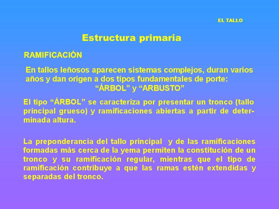 Estructura primaria RAMIFICACIÓN EL TALLO