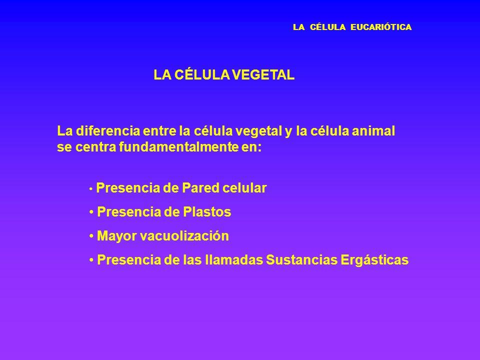 LA CÉLULA EUCARIÓTICA LA CÉLULA VEGETAL Presencia de Pared celular Presencia de Plastos Mayor vacuolización Presencia de las llamadas Sustancias Ergás
