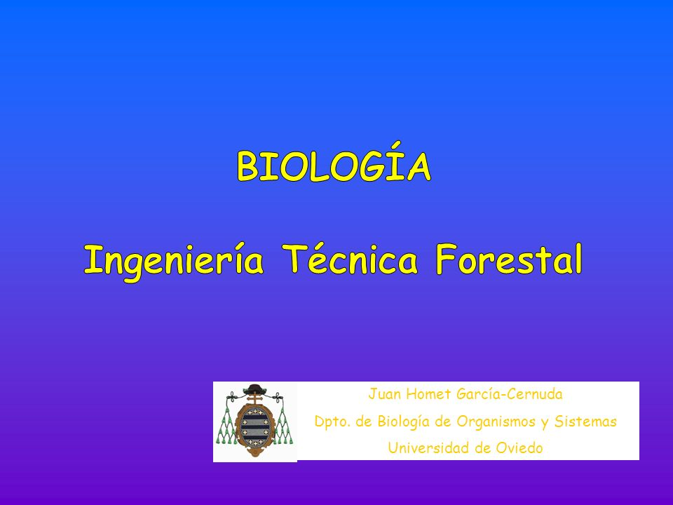 Las raíces con más de dos polos de protoxilema suelen ser ISÓSTICAS Raíz tetrárcaRaíz poliarca FORMACIÓN DE LAS RAÍCES LATERALES LA RAÍZ