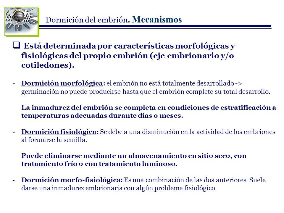 Dormición del embrión. Mecanismos Está determinada por características morfológicas y fisiológicas del propio embrión (eje embrionario y/o cotiledones