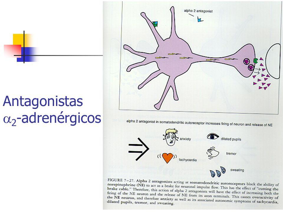 Antagonistas 2 -adrenérgicos