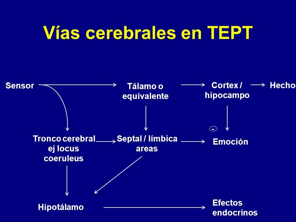 Vías cerebrales en TEPT Sensor Tálamo o equivalente Tronco cerebral ej locus coeruleus Hipotálamo Septal / límbica areas Cortex / hipocampo Efectos en