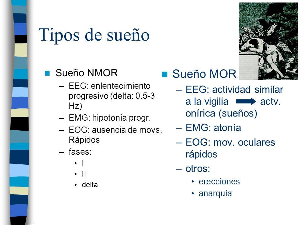 Tipos de sueño Sueño MOR –EEG: actividad similar a la vigilia actv. onírica (sueños) –EMG: atonía –EOG: mov. oculares rápidos –otros: erecciones anarq