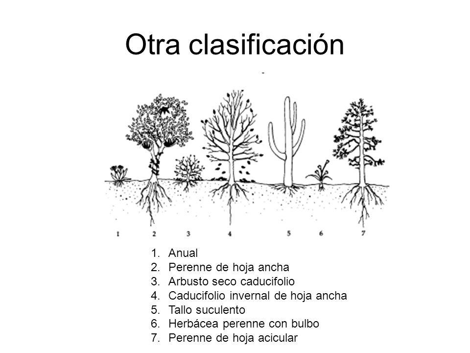 Otra clasificación 1.Anual 2.Perenne de hoja ancha 3.Arbusto seco caducifolio 4.Caducifolio invernal de hoja ancha 5.Tallo suculento 6.Herbácea perenn