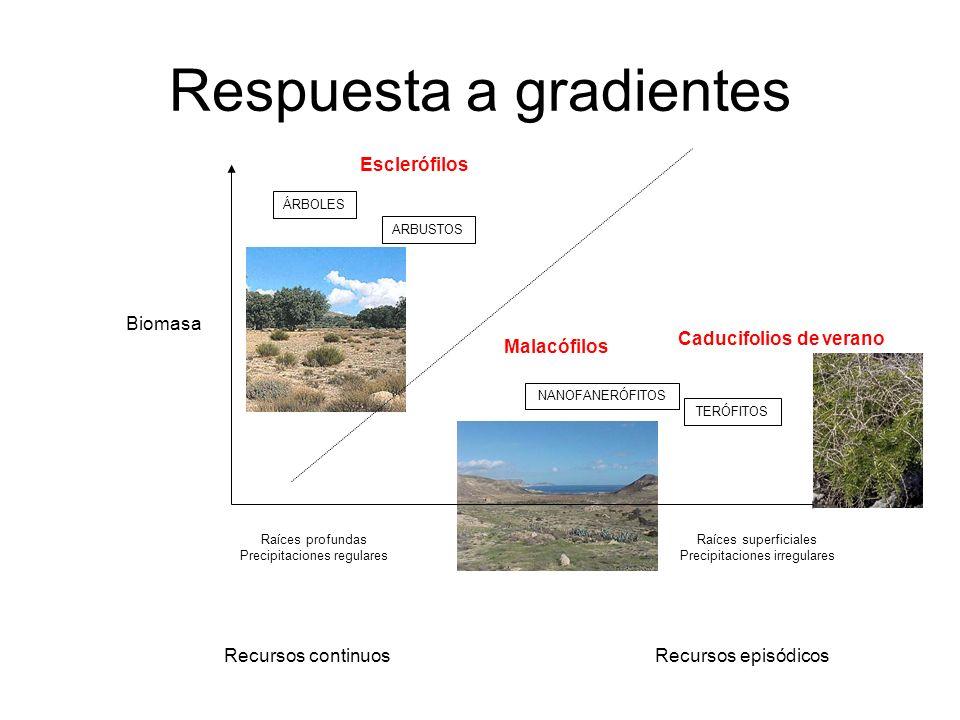 Respuesta a gradientes Recursos continuosRecursos episódicos Biomasa ÁRBOLES ARBUSTOS NANOFANERÓFITOS TERÓFITOS Malacófilos Esclerófilos Caducifolios