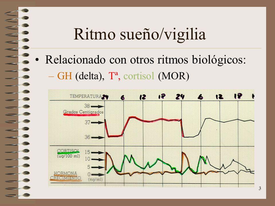 3 Ritmo sueño/vigilia Relacionado con otros ritmos biológicos: –GH (delta), Tª, cortisol (MOR)