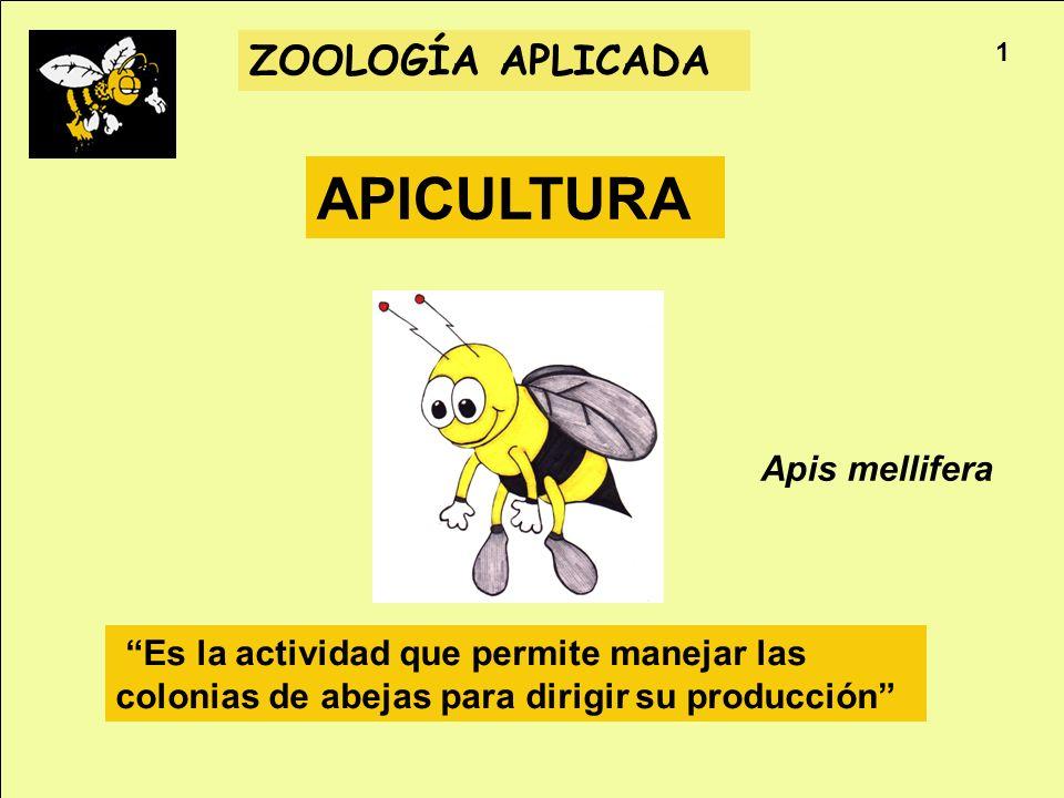 Apicultura ZOOLOGÍA APLICADA APICULTURA Es la actividad que permite manejar las colonias de abejas para dirigir su producción Apis mellifera 1