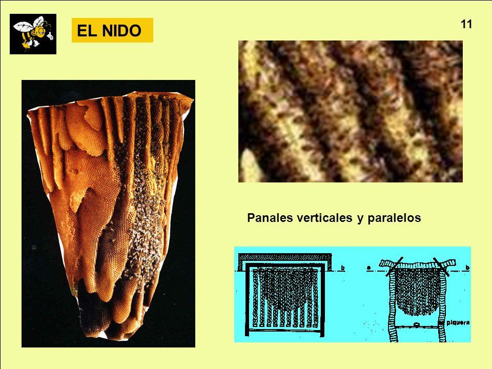 Apicultura 11 EL NIDO Panales verticales y paralelos