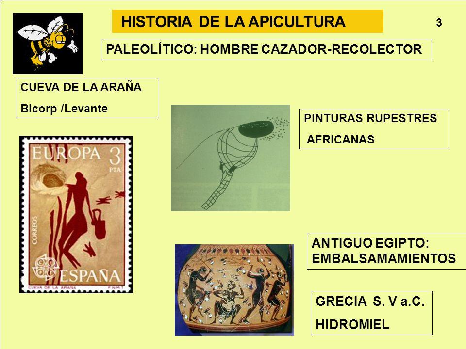 Apicultura 3 HISTORIA DE LA APICULTURA CUEVA DE LA ARAÑA Bicorp /Levante PINTURAS RUPESTRES AFRICANAS PALEOLÍTICO: HOMBRE CAZADOR-RECOLECTOR GRECIA S.