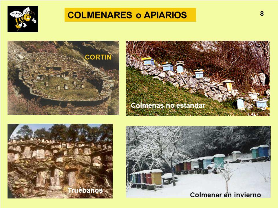 Apicultura 8 COLMENARES o APIARIOS Colmenar en invierno CORTIN Colmenas no estandar Truébanos