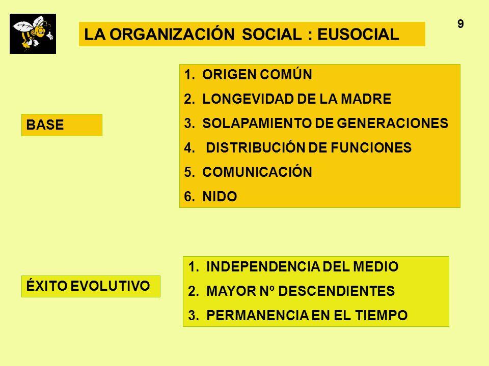 Apicultura 9 LA ORGANIZACIÓN SOCIAL : EUSOCIAL 1.ORIGEN COMÚN 2.LONGEVIDAD DE LA MADRE 3.SOLAPAMIENTO DE GENERACIONES 4. DISTRIBUCIÓN DE FUNCIONES 5.C