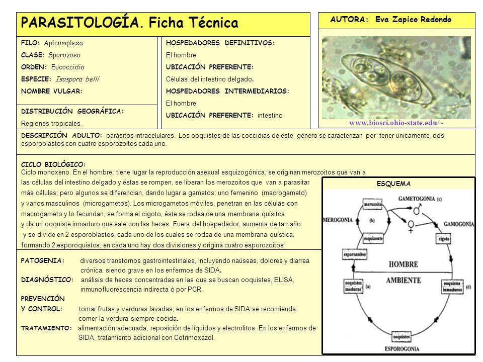 GALERIA FOTOGRÁFICA CON REFERENCIAS BIBLIOGRÁFICAS COMPLETAS: EJEMPLO:http://www.uniovi.es/bos/Asignaturas/Parasit/ Introduccion.htm PARASITOLOGÍA.