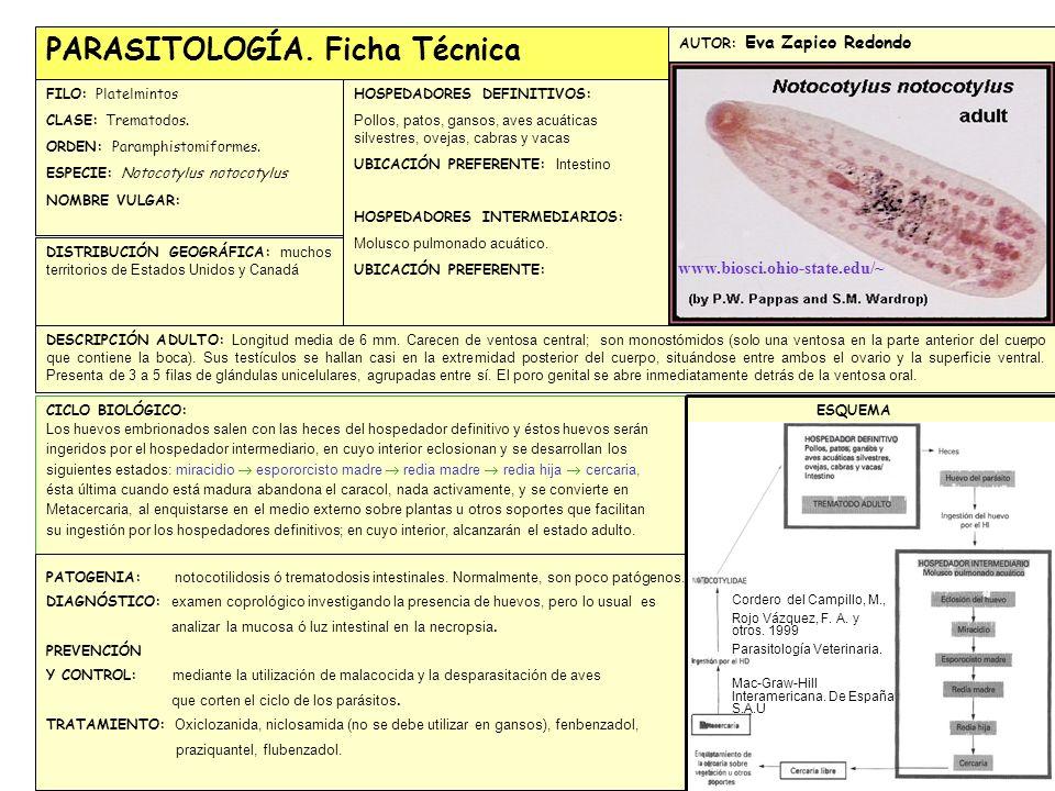 PARASITOLOGÍA. Ficha Técnica FILO: Platelmintos CLASE: Trematodos. ORDEN: Paramphistomiformes. ESPECIE: Notocotylus notocotylus NOMBRE VULGAR: DISTRIB