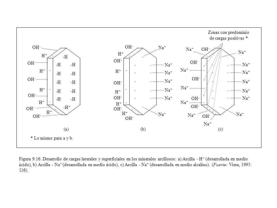 Figura 9.16. Desarrollo de cargas laterales y superficiales en los minerales arcillosos: a) Arcilla - H + (desarrollada en medio ácido), b) Arcilla -