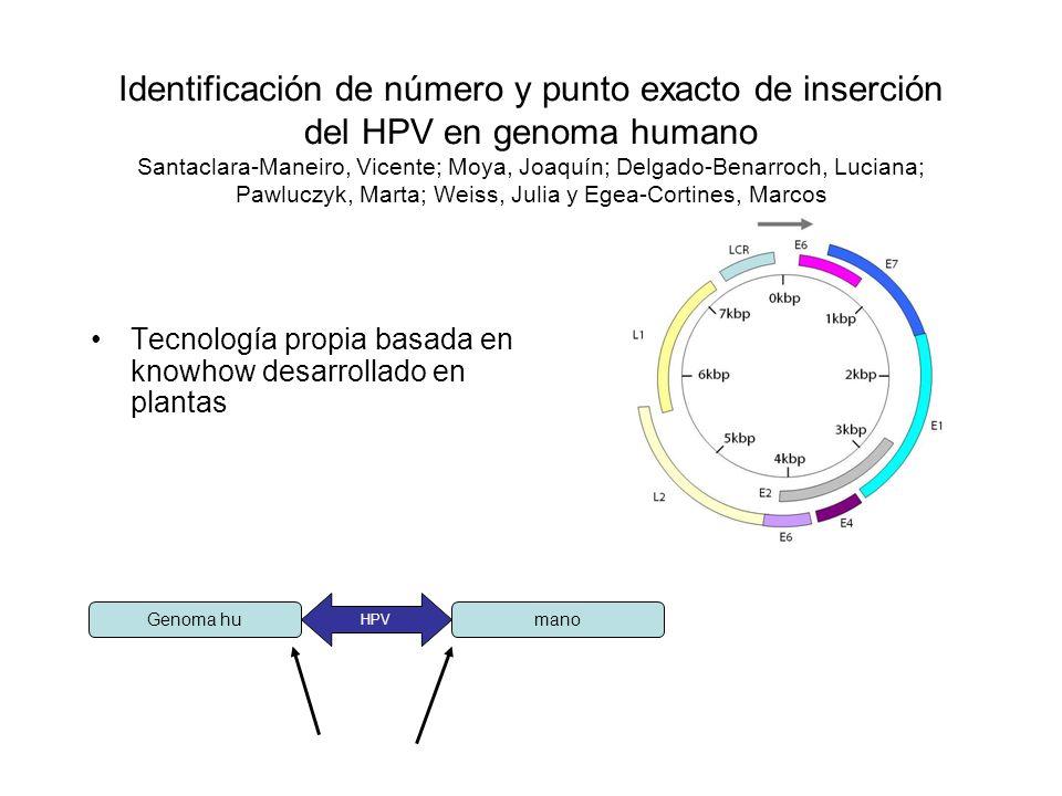 Identificación de número y punto exacto de inserción del HPV en genoma humano Santaclara-Maneiro, Vicente; Moya, Joaquín; Delgado-Benarroch, Luciana;