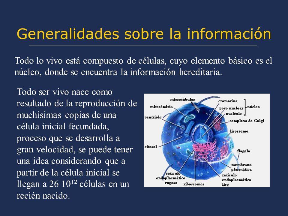 Generalidades sobre la información Todo ser vivo nace como resultado de la reproducción de muchísimas copias de una célula inicial fecundada, proceso