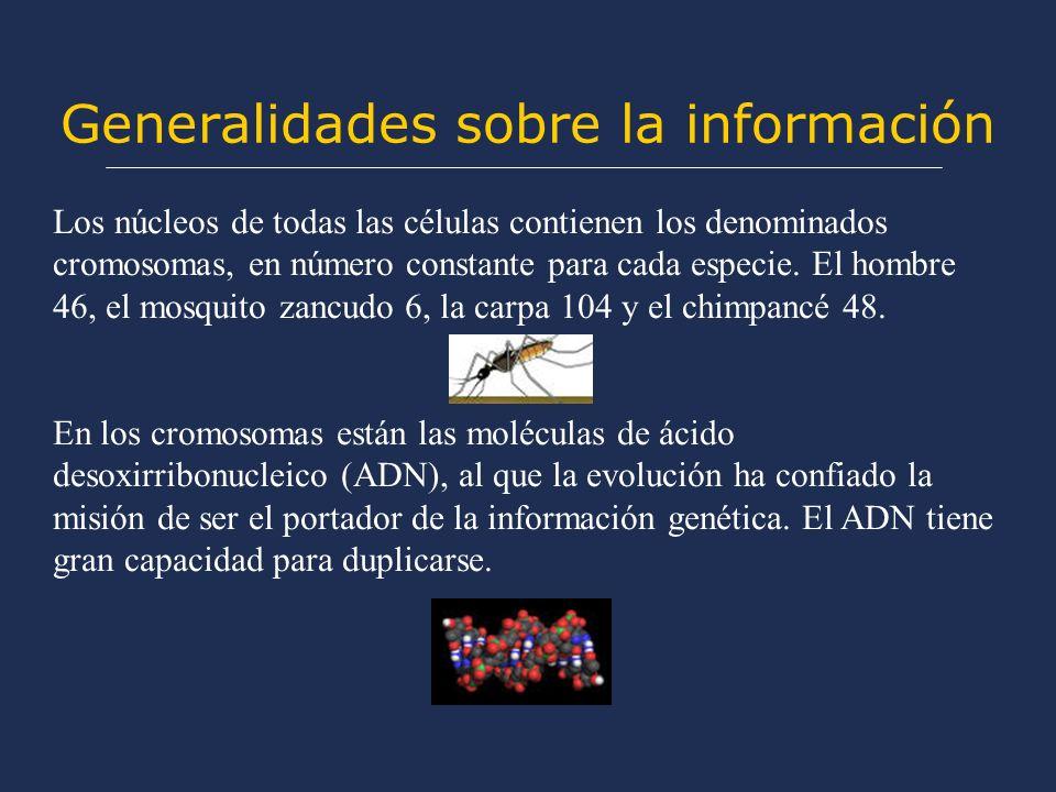 Generalidades sobre la información Los núcleos de todas las células contienen los denominados cromosomas, en número constante para cada especie. El ho