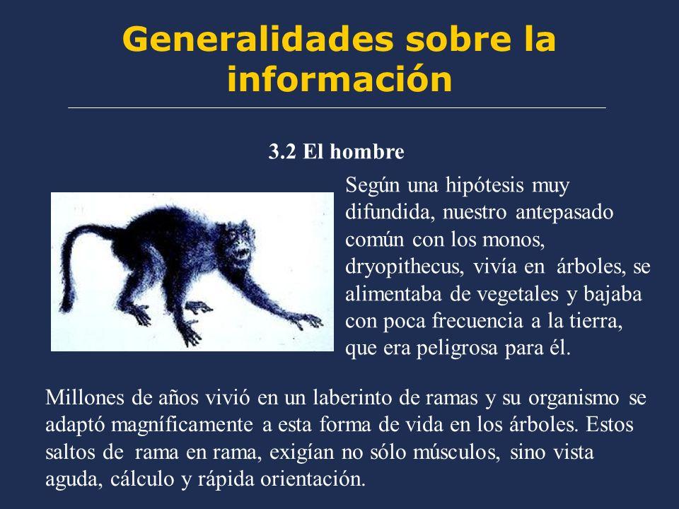 Generalidades sobre la información 3.2 El hombre Según una hipótesis muy difundida, nuestro antepasado común con los monos, dryopithecus, vivía en árboles, se alimentaba de vegetales y bajaba con poca frecuencia a la tierra, que era peligrosa para él.