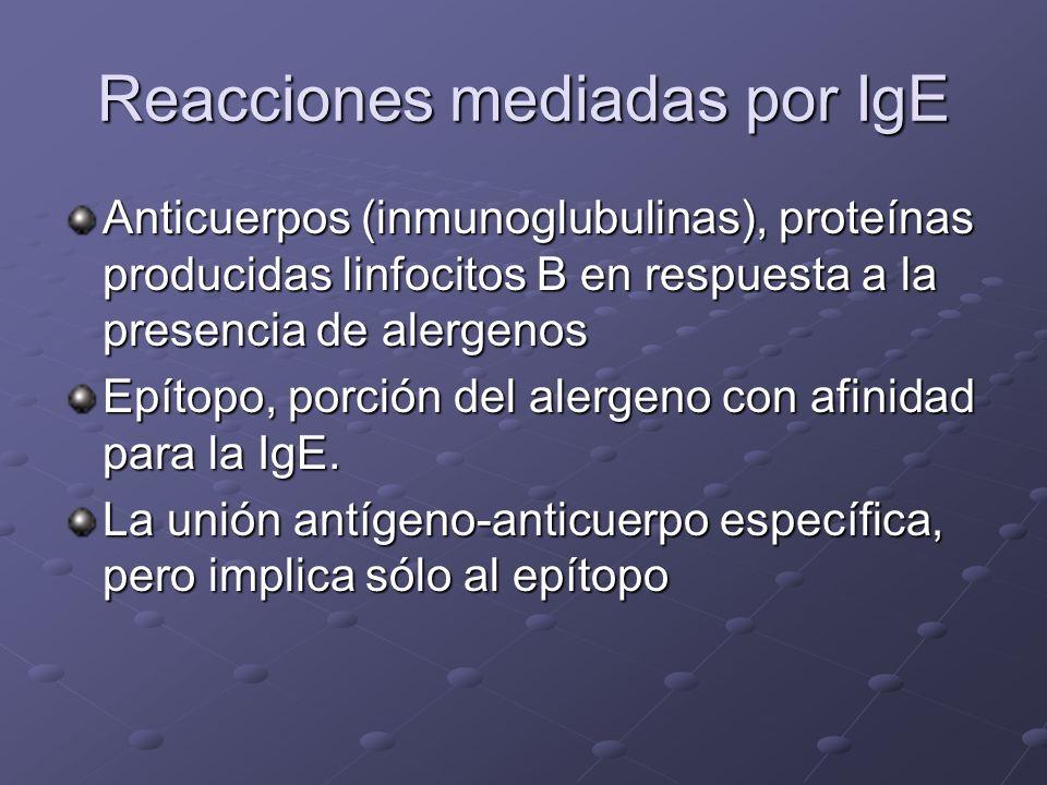 Mecanismo de la reacción alérgica Hipersensibilidad retardada o tipo IV Respuesta celular al antígeno, no mediada por IgE, el alergeno se une a linfoc
