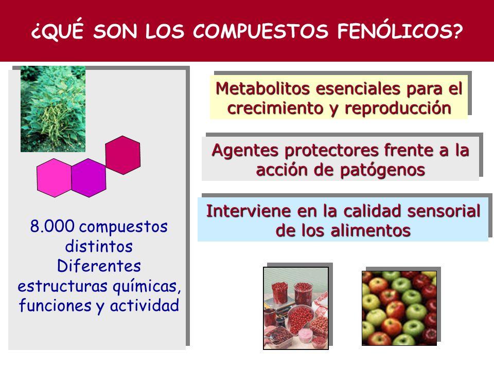 COMPUESTOS FENÓLICOS FENÓLICOS