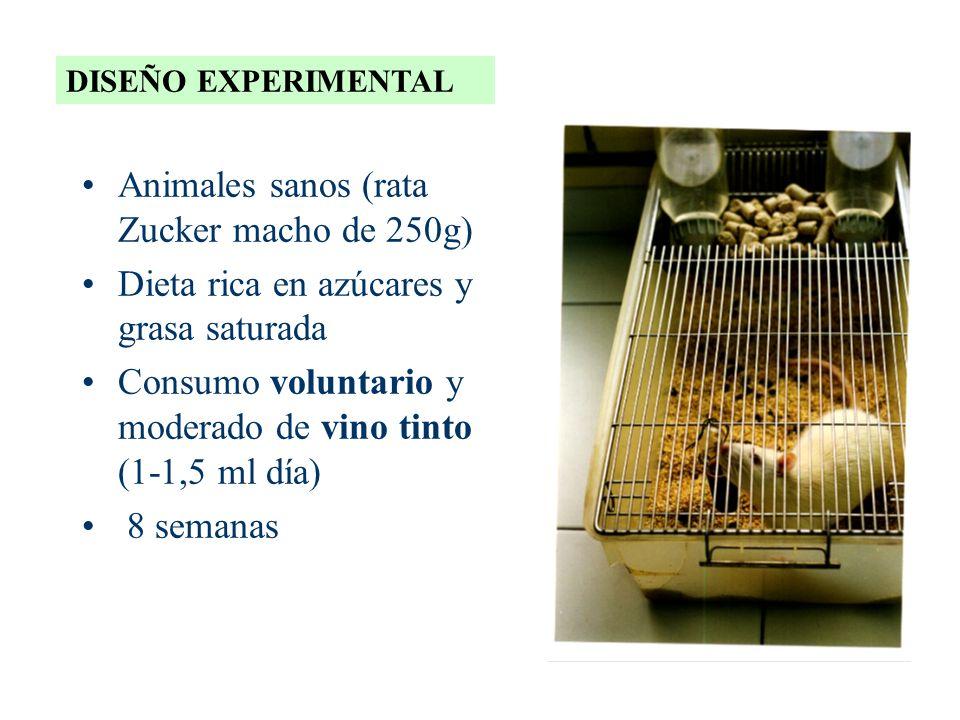 Animales sanos (rata Zucker macho de 250g) Dieta rica en azúcares y grasa saturada Consumo voluntario y moderado de vino tinto (1-1,5 ml día) 8 semana