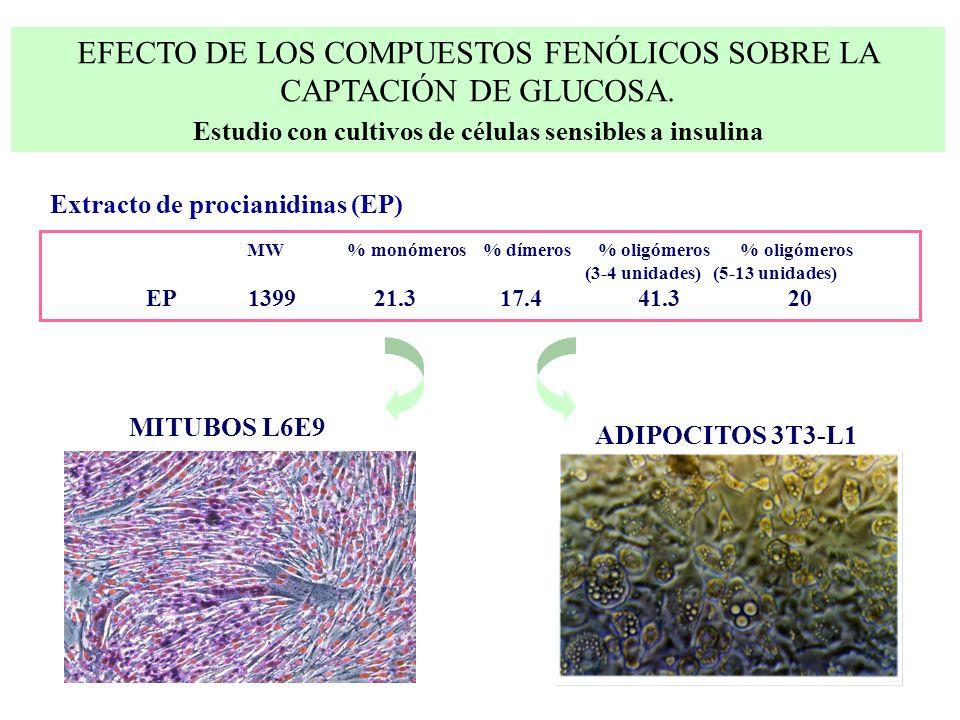 MW % monómeros % dímeros % oligómeros % oligómeros (3-4 unidades) (5-13 unidades) EP 1399 21.3 17.4 41.3 20 Extracto de procianidinas (EP) MITUBOS L6E