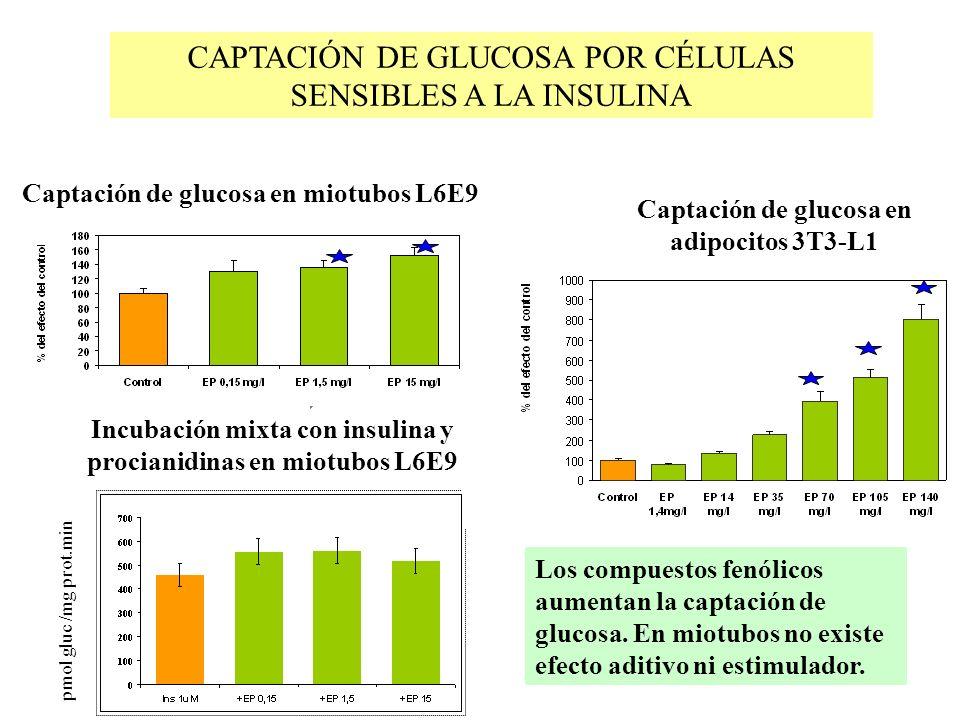 CAPTACIÓN DE GLUCOSA POR CÉLULAS SENSIBLES A LA INSULINA Captación de glucosa en miotubos L6E9 pmol gluc /mg prot.min Incubación mixta con insulina y