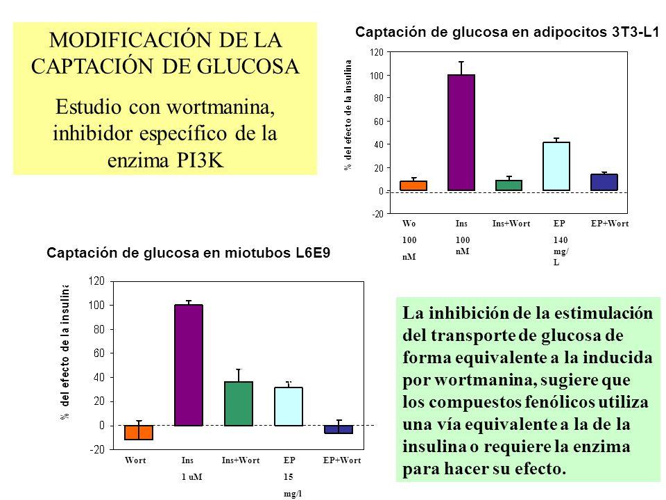b d WortIns 1 uM Ins+Wort EP 15 mg/l EP+Wort abab abab d Captación de glucosa en miotubos L6E9 La inhibición de la estimulación del transporte de gluc