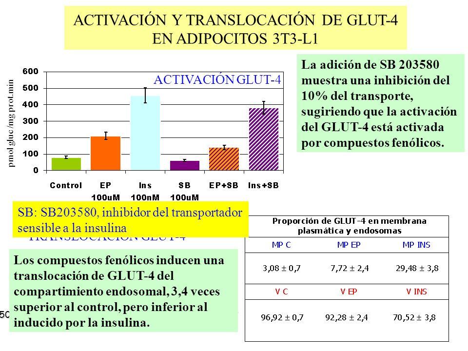 ACTIVACIÓN Y TRANSLOCACIÓN DE GLUT-4 EN ADIPOCITOS 3T3-L1 ab La adición de SB 203580 muestra una inhibición del 10% del transporte, sugiriendo que la