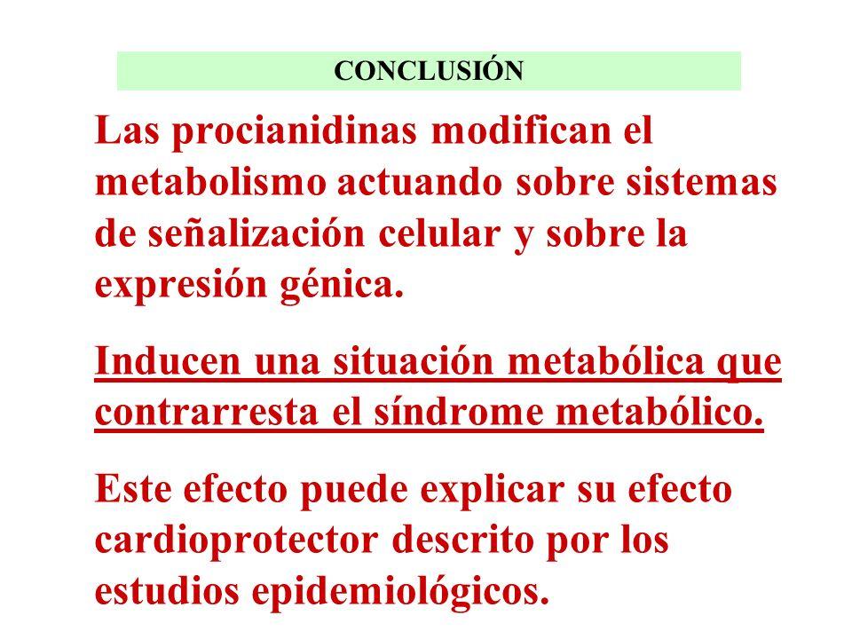 Las procianidinas modifican el metabolismo actuando sobre sistemas de señalización celular y sobre la expresión génica. Inducen una situación metabóli