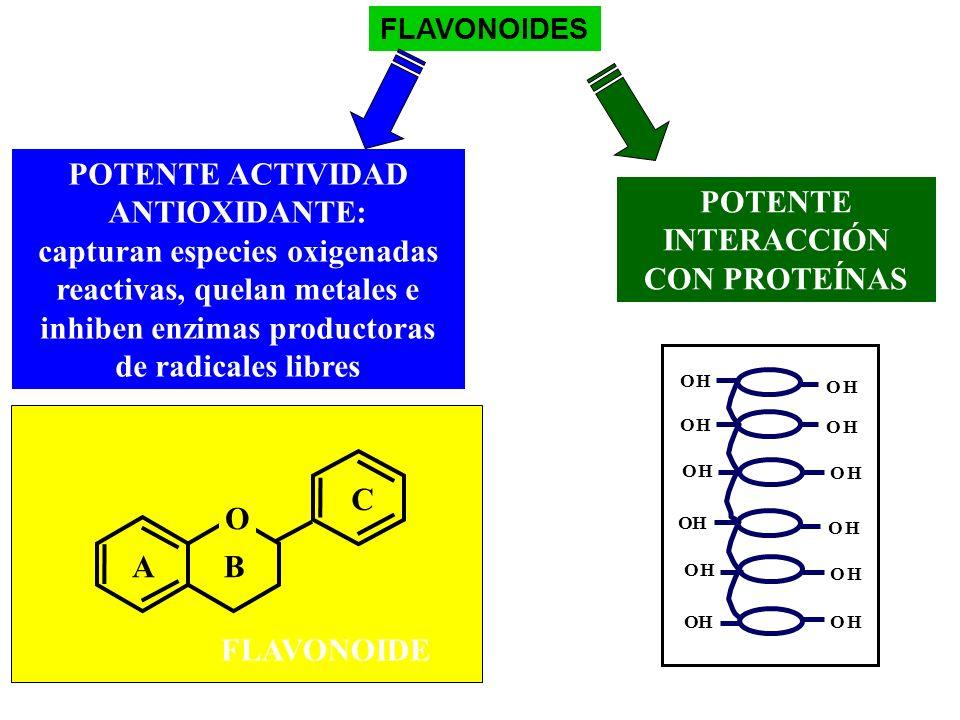 FLAVONOIDES POTENTE INTERACCIÓN CON PROTEÍNAS OH OH OH OH OH OHOH OH OH OH OH OH POTENTE ACTIVIDAD ANTIOXIDANTE: capturan especies oxigenadas reactiva