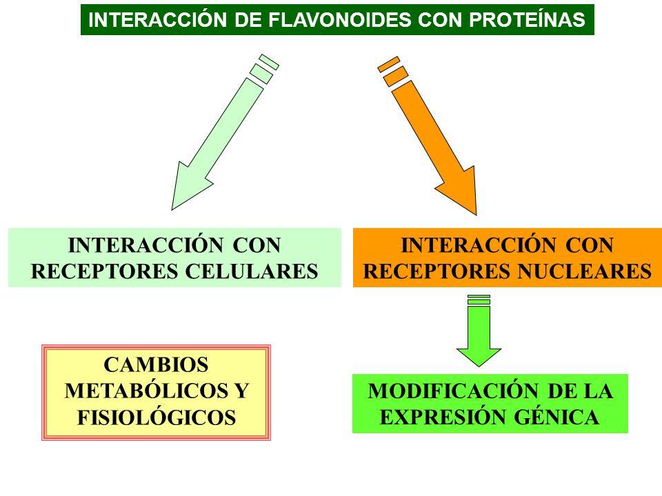 INTERACCIÓN CON RECEPTORES NUCLEARES MODIFICACIÓN DE LA EXPRESIÓN GÉNICA INTERACCIÓN DE FLAVONOIDES CON PROTEÍNAS INTERACCIÓN CON RECEPTORES CELULARES