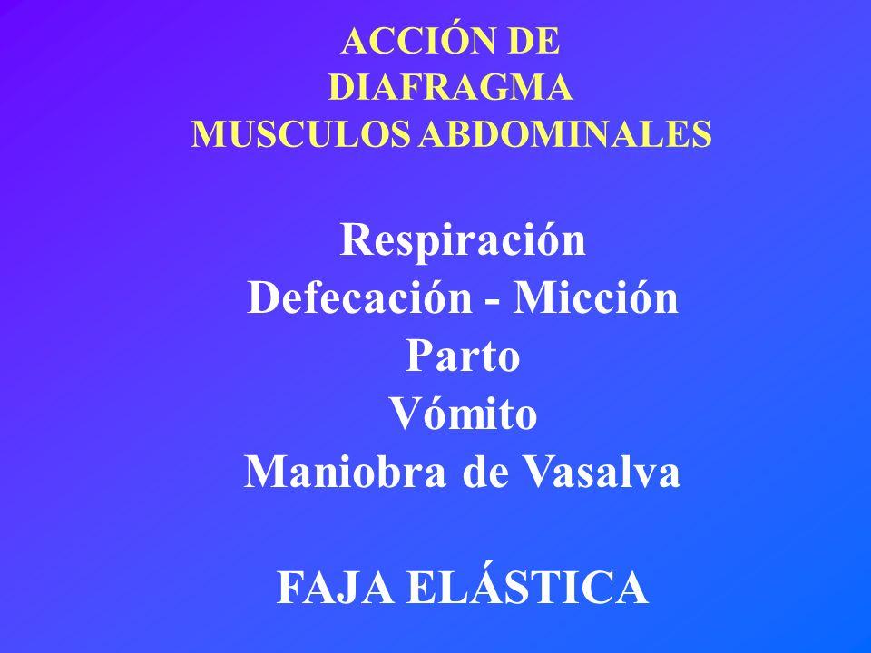 ACCIÓN DE DIAFRAGMA MUSCULOS ABDOMINALES Respiración Defecación - Micción Parto Vómito Maniobra de Vasalva FAJA ELÁSTICA