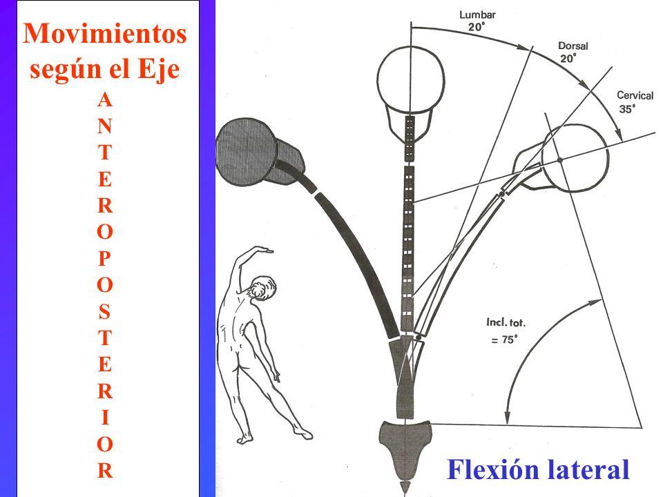 Flexión lateral Movimientos según el Eje A N T E R O P O S T E R I O R