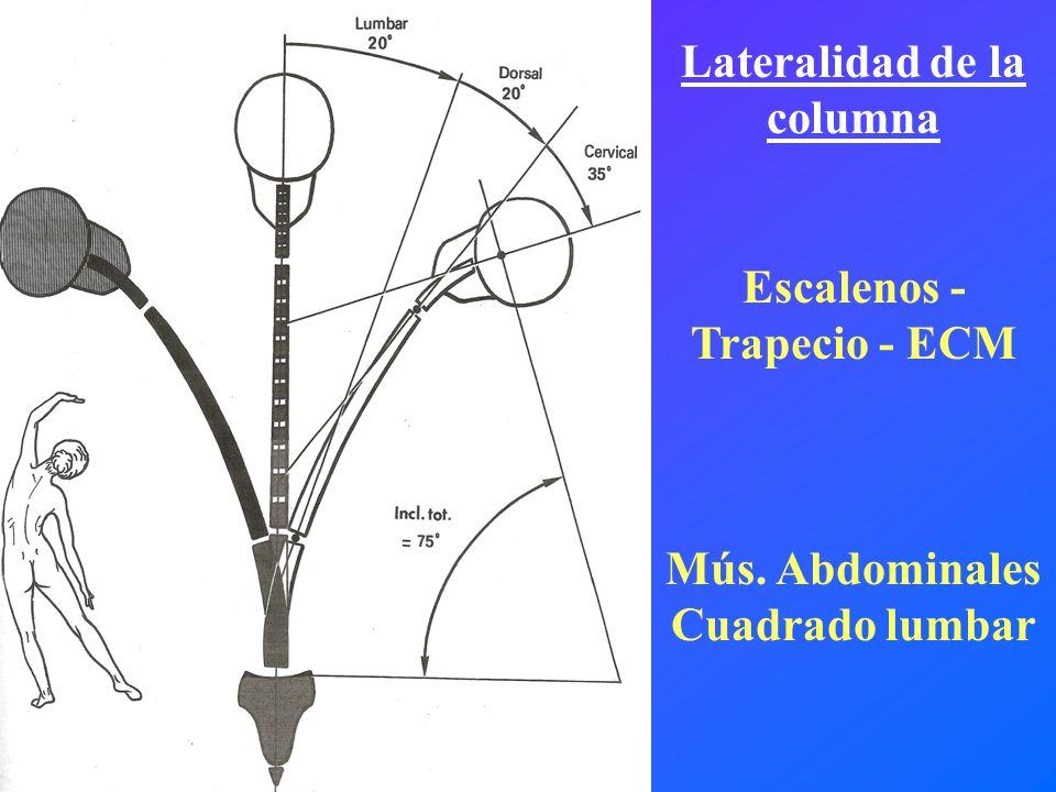 Lateralidad de la columna Escalenos - Trapecio - ECM Mús. Abdominales Cuadrado lumbar