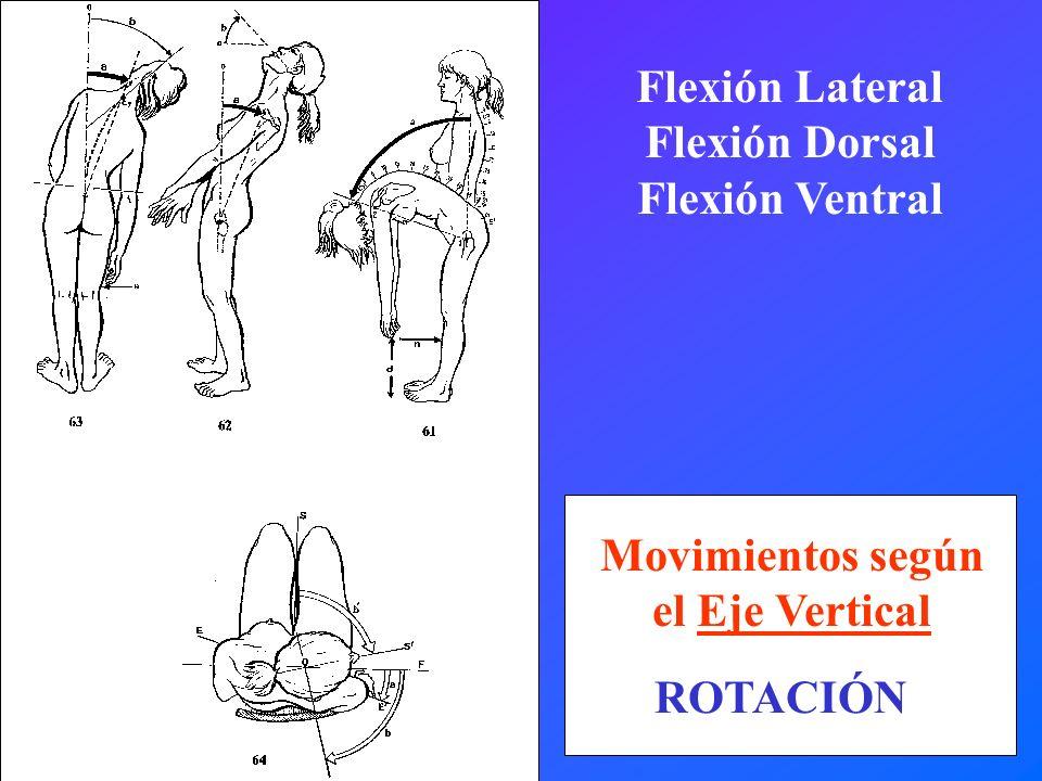 Movimientos según el Eje Vertical ROTACIÓN Flexión Lateral Flexión Dorsal Flexión Ventral