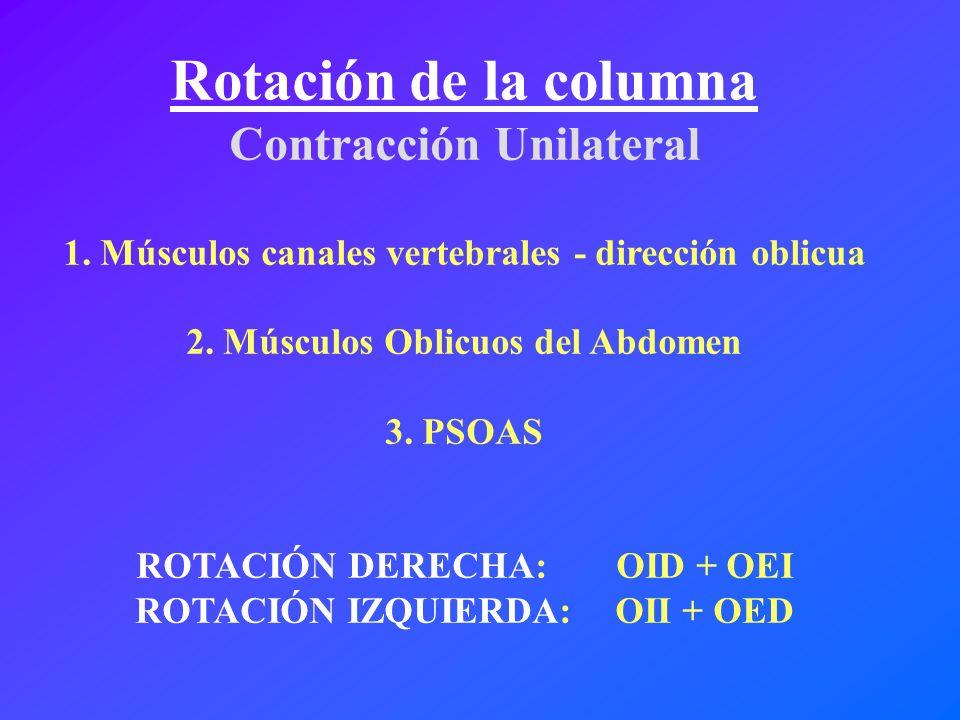 Rotación de la columna Contracción Unilateral 1. Músculos canales vertebrales - dirección oblicua 2. Músculos Oblicuos del Abdomen 3. PSOAS ROTACIÓN D