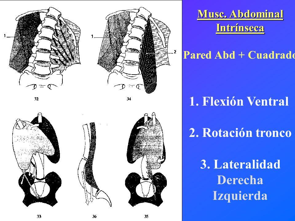Musc. Abdominal Intrínseca Pared Abd + Cuadrado 1. Flexión Ventral 2. Rotación tronco 3. Lateralidad Derecha Izquierda