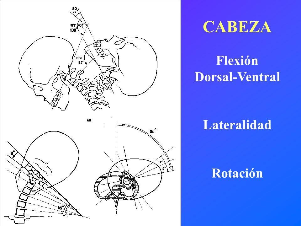 CABEZA Flexión Dorsal-Ventral Lateralidad Rotación