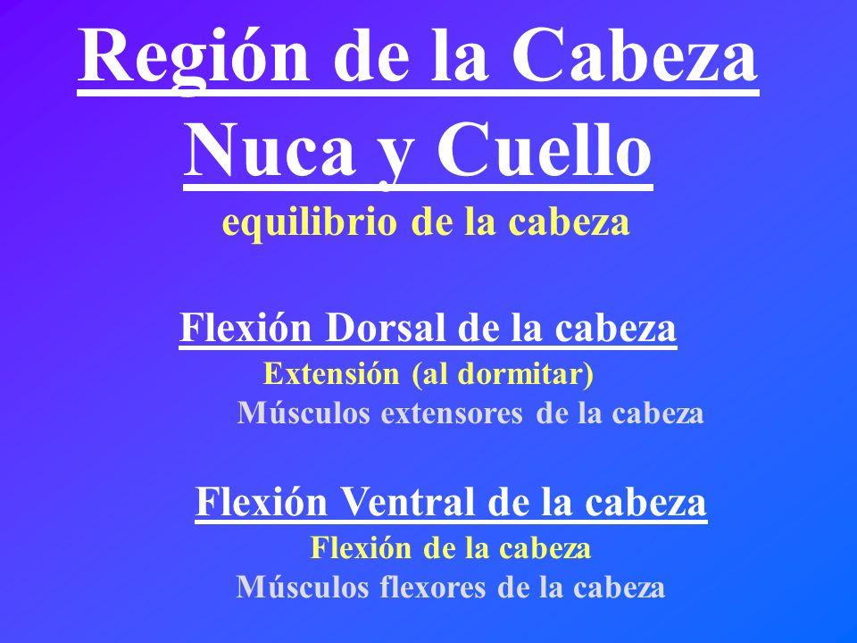 Región de la Cabeza Nuca y Cuello equilibrio de la cabeza Flexión Ventral de la cabeza Flexión de la cabeza Músculos flexores de la cabeza Flexión Dor