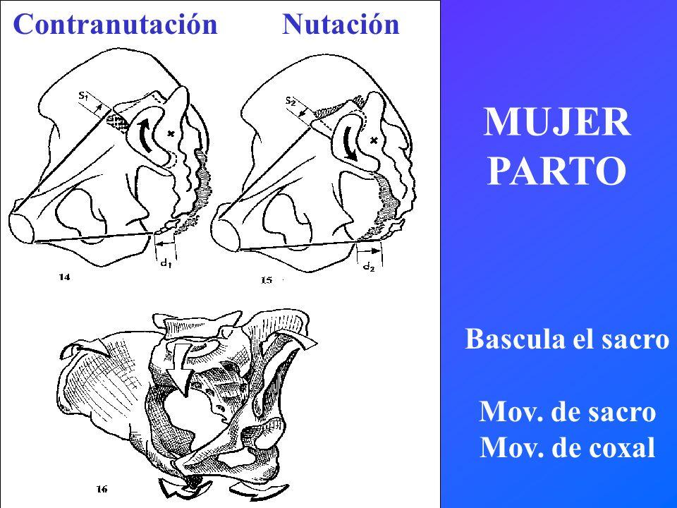 ContranutaciónNutación Bascula el sacro Mov. de sacro Mov. de coxal MUJER PARTO
