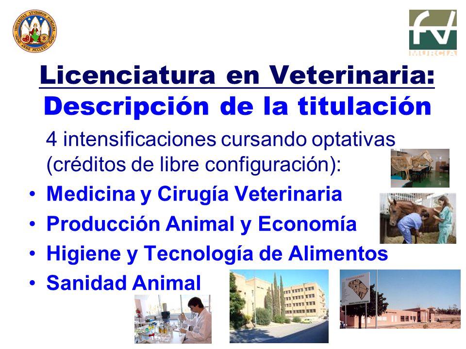 Licenciatura en Veterinaria: Descripción de la titulación 4 intensificaciones cursando optativas (créditos de libre configuración): Medicina y Cirugía Veterinaria Producción Animal y Economía Higiene y Tecnología de Alimentos Sanidad Animal